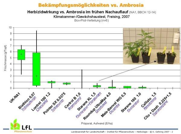 Herbizidwirkung gegen Ambrosia (Präparatetest) - LfL