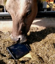 Wilma mit Tablet