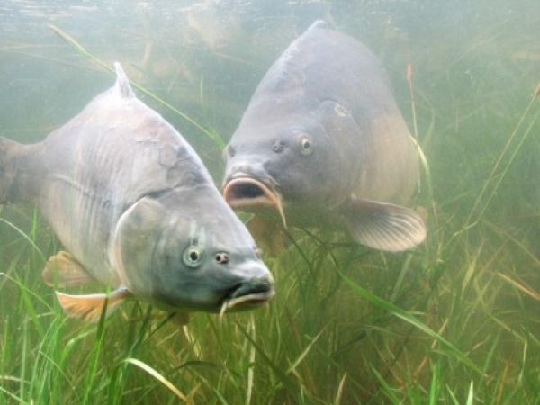 Die lfl auf der landesgartenschau in bayreuth 2016 lfl for Speisefische im gartenteich